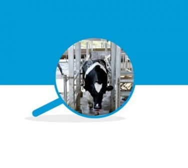 Online evaluation of milk quality according to coagulation properties for its optimal distribution for industrial applications