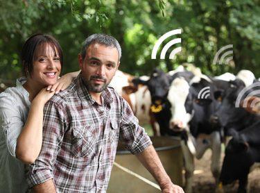 Diary Farmer life