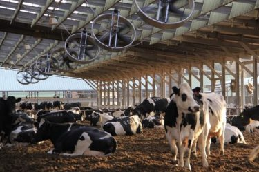 Animal Welfare Guidelines for DAIRY FARMERS
