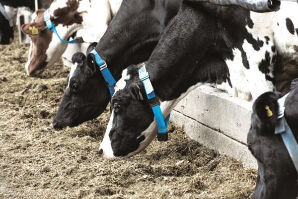 New parameters to aid in the diagnosis of disease in post-partum dairy cows
