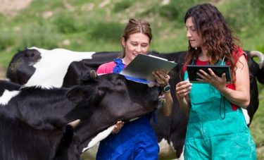 Diagnosis of Mastitis and Diagnostic Methods for Investigating Udder Health Problems