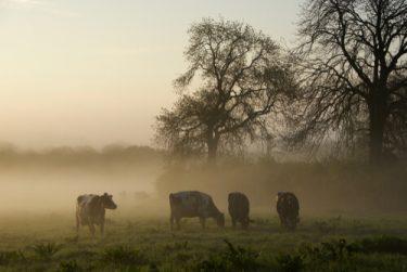 dairy farm life