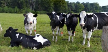 Heat-stress effects on dairy cattle behavior