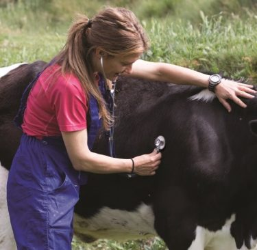 Achieving Optimal Cow Performance with the Aid of Information Systems